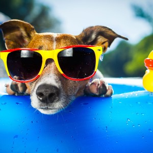 A funny dog wearing sunglasses.