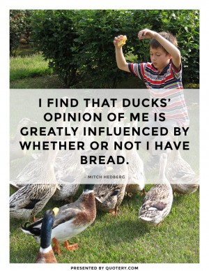ducks'-opinion-of-me