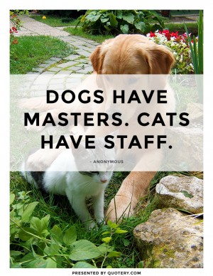cats-have-staff