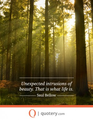Unexpected intrusions of beauty. That is what life is.