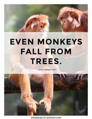 even-monkeys-fall-from-trees
