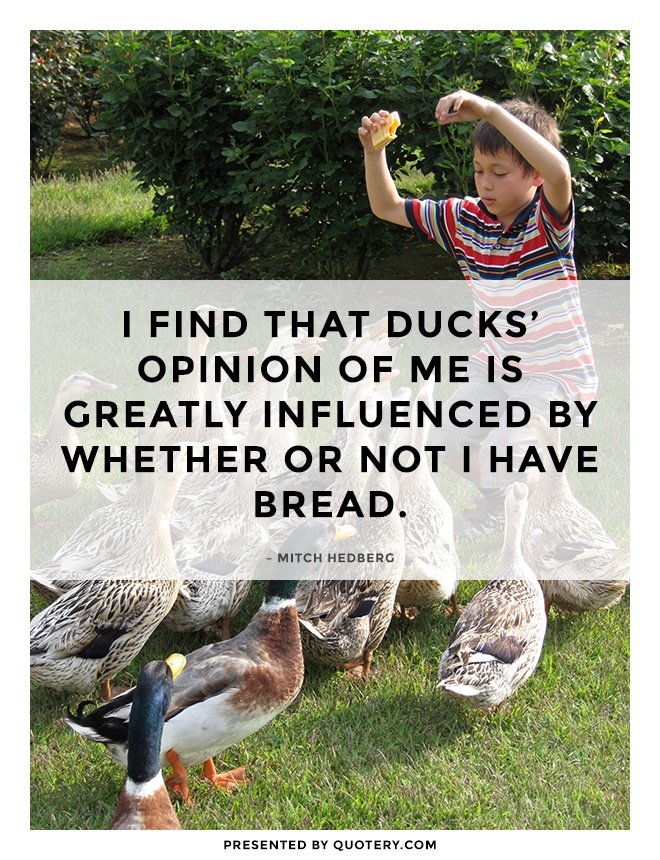 """I find that ducks' opinion of me is greatly influenced by whether or not I have bread."" — Mitch Hedberg"