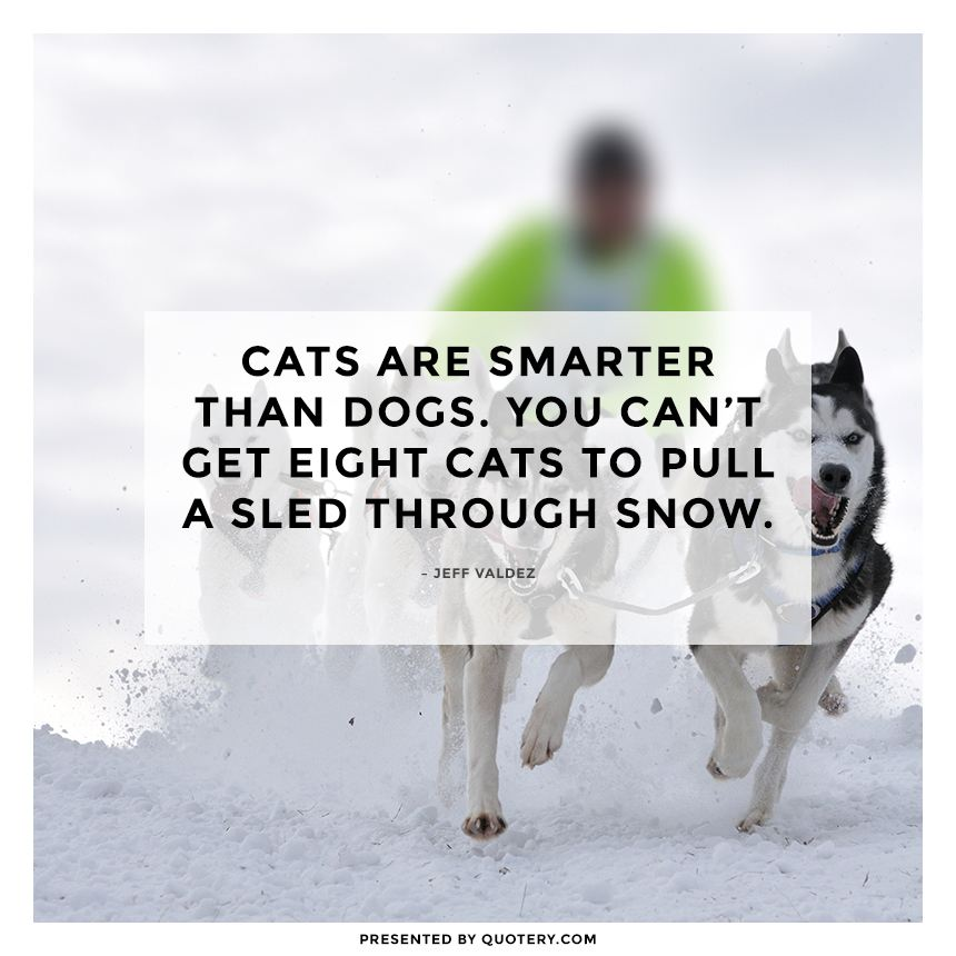 """Cats are smarter than dogs. You can't get eight cats to pull a sled through snow."" — Jeff Valdez"