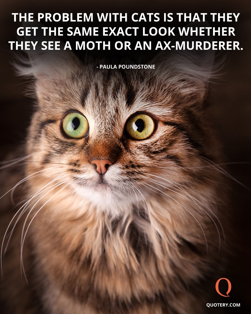 """""""The problem with cats is that they get the same exact look whether they see a moth or an ax-murderer."""" — Paula Poundstone"""