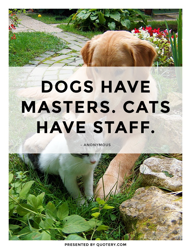 """""""Dogs have masters. Cats have staff."""" — Anonymous"""