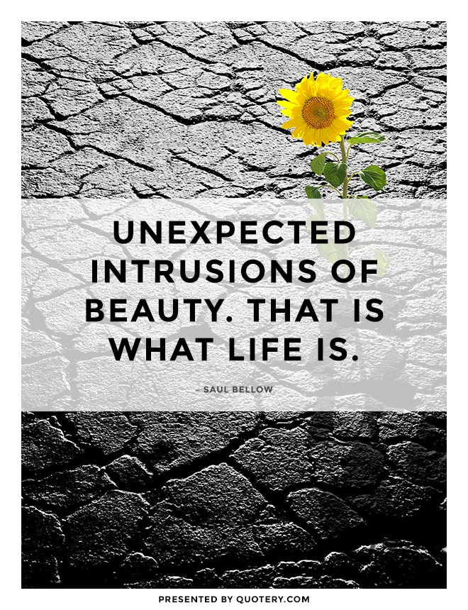 """Unexpected intrusions of beauty. That is what life is."" — Saul Bellow"