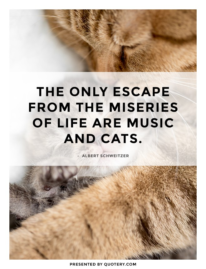 """""""The only escape from the miseries of life are music and cats."""" — Albert Schweitzer"""