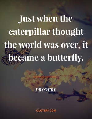 butterfly-proverb