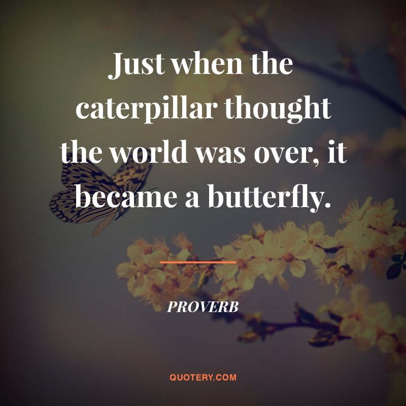 """""""Just when the caterpillar thought the world was over, it became a butterfly."""" — Proverb"""